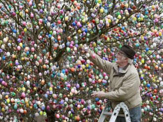 Easter egg tree in Thuringia has come into bloom
