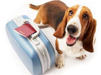 Going to visit Berlin with a dog? Do not forget to pay tax